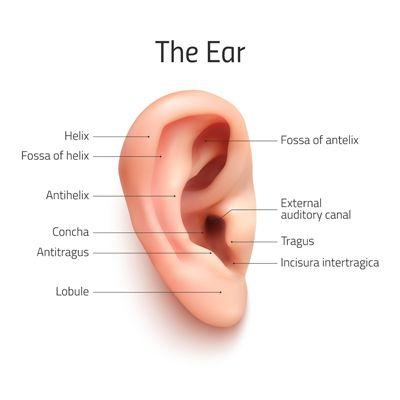 NYC Otoplasty/Ear Pinning | New York Congenital Ear Deformity Repair