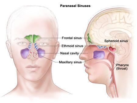 Sinus Surgery in NYC | New York Facial Plastic Surgeon
